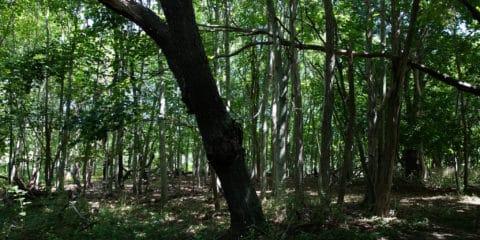 Manhansack-aqua-quash-awamock