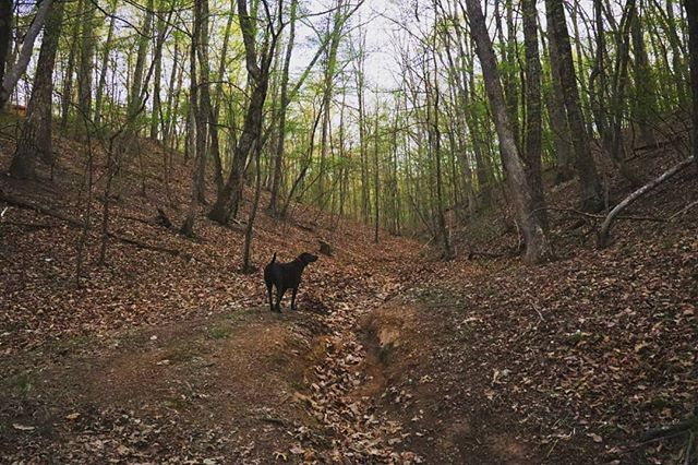 Led by a dog off the beaten path